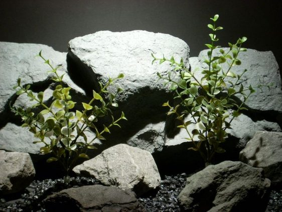 plastic aquarium plants boxwood bush pap079 ron beck designs