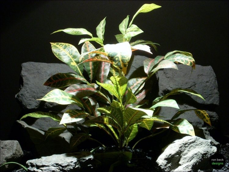 reptile habitat plants croton leaves bush srp075 ron beck designs