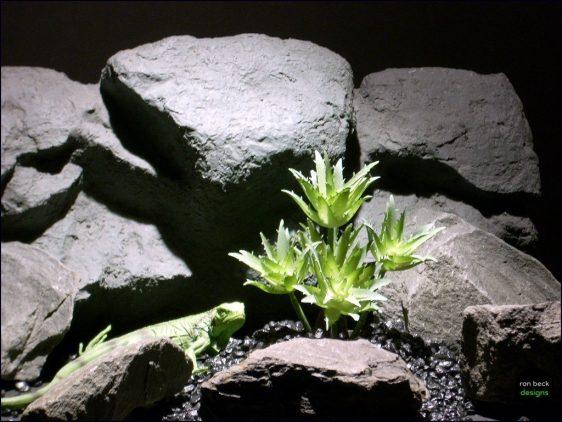 reptile habitat plants succulent star points prp066 plstc. ron beck designs