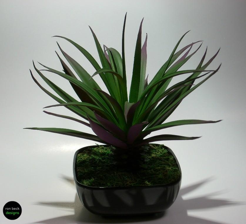 home decor succulent | ron beck designs