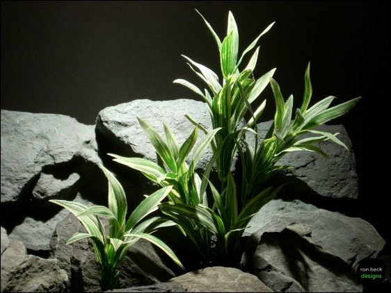silk reptile plant: spider bushs by ron beck designs