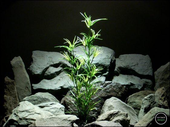 fAsparagus Bush - Reptile Amphibian Decor Plant varegated prp206