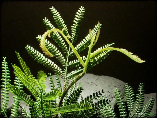 Artificial Mimosa Leaf Spray - Artificial Reptile Plant - Ron Beck Designs prp322 2