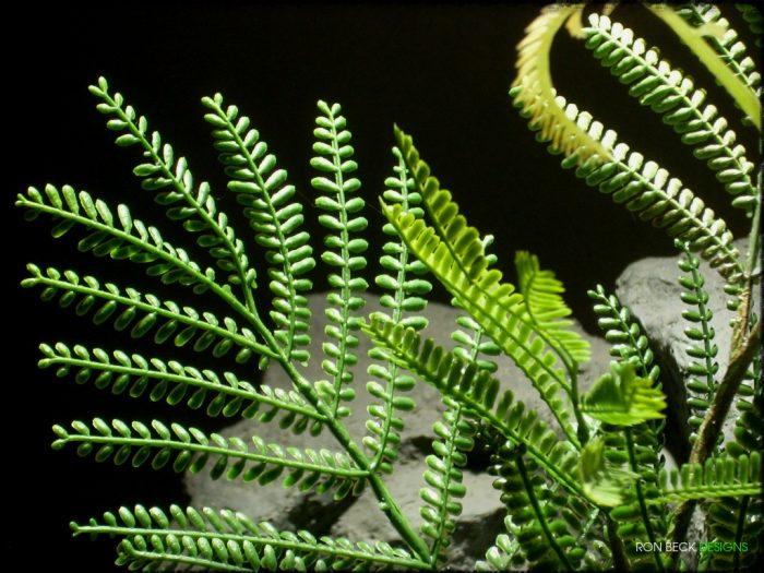 Artificial Mimosa Leaf Spray - Artificial Reptile Plant - Ron Beck Designs prp322 3