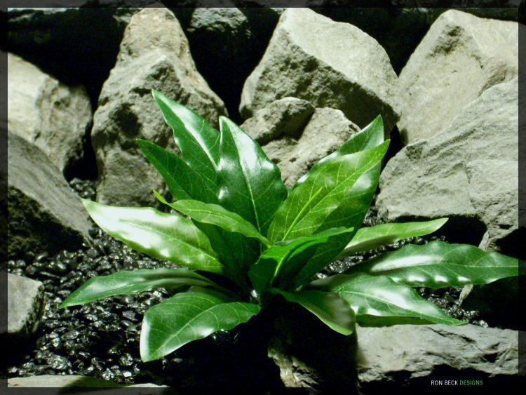 Artificial Bird of Paradise Leaves - Silk Reptile habitat Plant - srp342 2