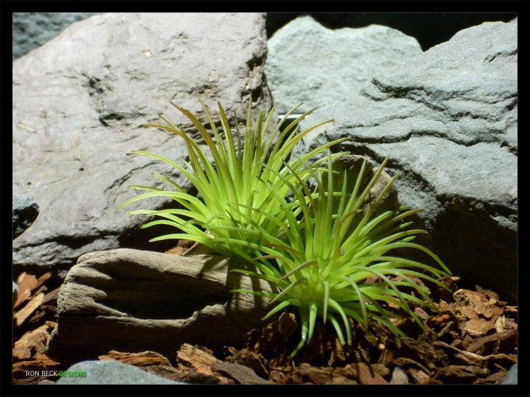 1 Scape - Introduction Post Image - Artificial Plants and Succulents - Ron Beck Designs - 1300 975 (1)