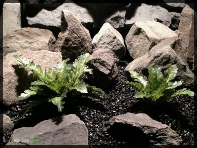 Artificial Silk Bracken Ferns - Artificial Reptile Habitat Plants - srp350 2