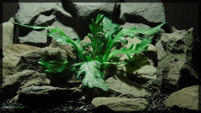 Artificial Phoenix Tail Fern - Silk Reptile Habitat Decor Plant - SRP358