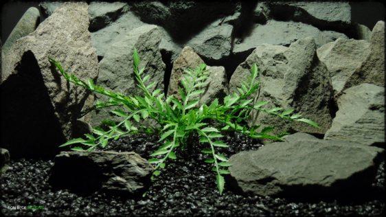 Artificial Sensitive Fern - Artificial Reptile Habitat Plant prp362