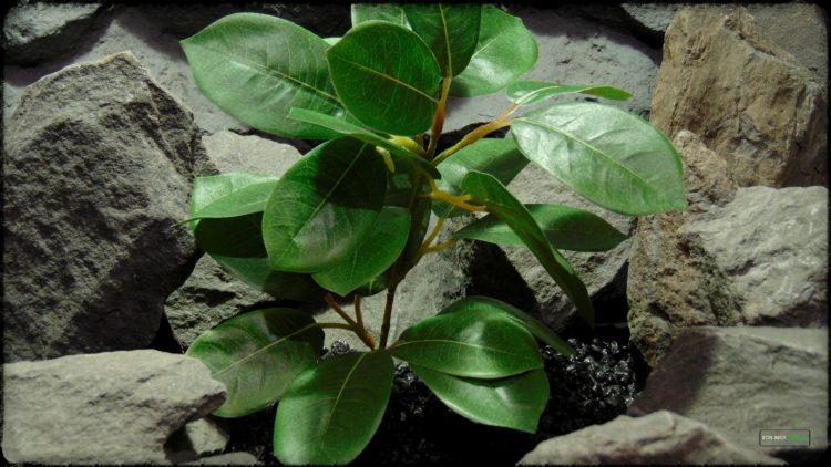Artificial Lemon Leaves Plant - Silk Reptile Habitat Plant - srp373 2