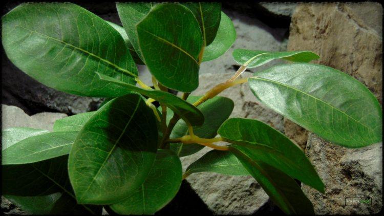 Artificial Lemon Leaves Plant - Silk Reptile Habitat Plant - srp373 3