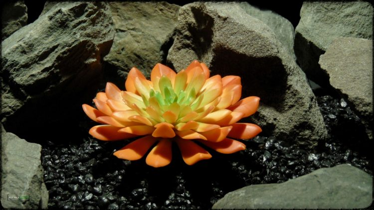 Artificial Succulent (L) - Artificial Reptile Desert Decor - prp375 2