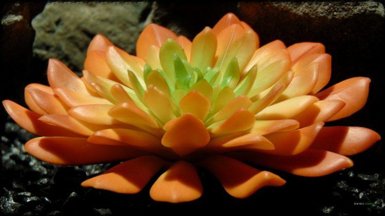 Artificial Succulent (L) - Artificial Reptile Desert Decor - prp375 3