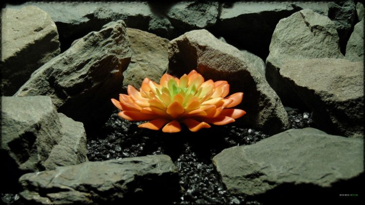 Artificial Succulent (L) - Artificial Reptile Desert Decor - prp375