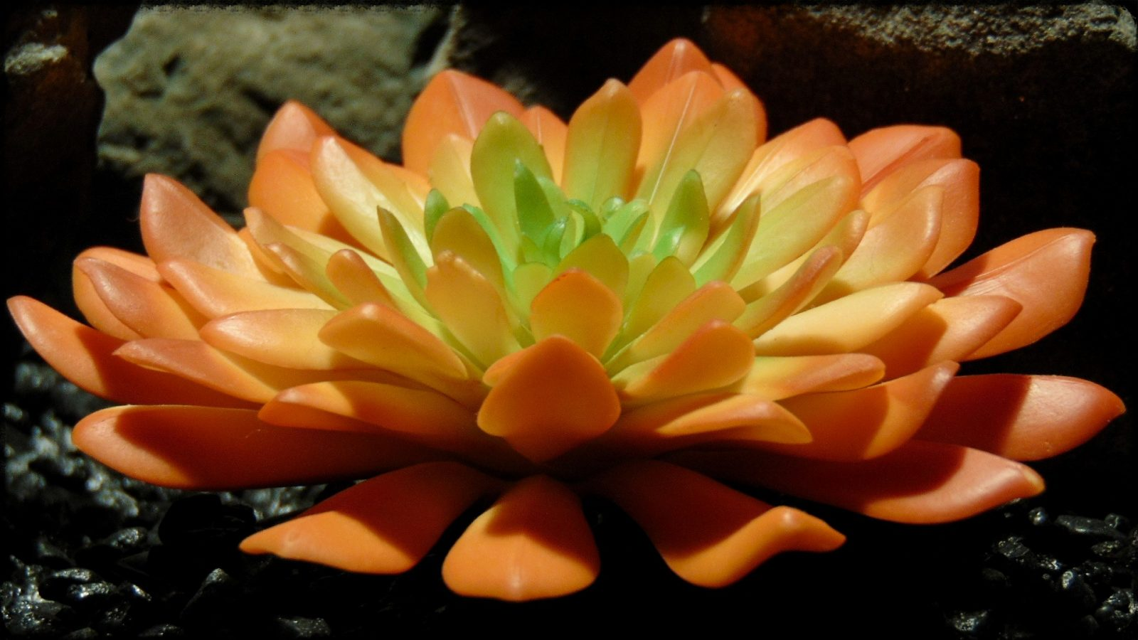 free Desktop Wallpaper - Artificial Ornage Succulent - Ron Beck Designs - 1920 x 1080