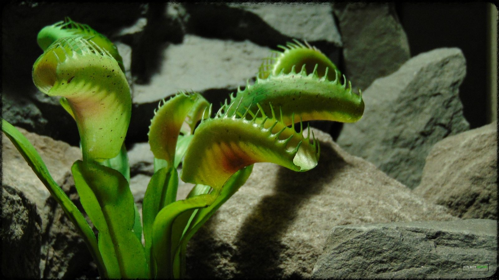Free Desktop Wallpaper - Artificial Venus Flytrap - Ron Beck Designs - 1920 x 1080