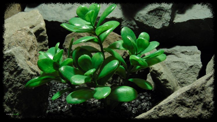 Artificial Jade Plant - Artificial Reptile Habitat Plant - prp382 2 - prp382 3