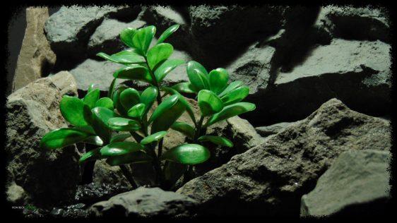 Artificial Jade Plant - Artificial Reptile Habitat Plant - prp382