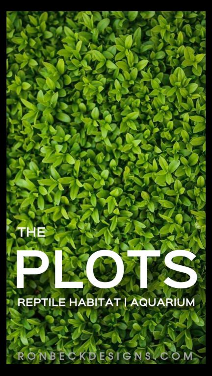 The Plots - Google Stories - black 720 1280 - amp pages
