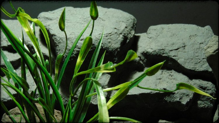 Artificial Chain Sword Grass - Reptile Habitat Plant - PRP384 2