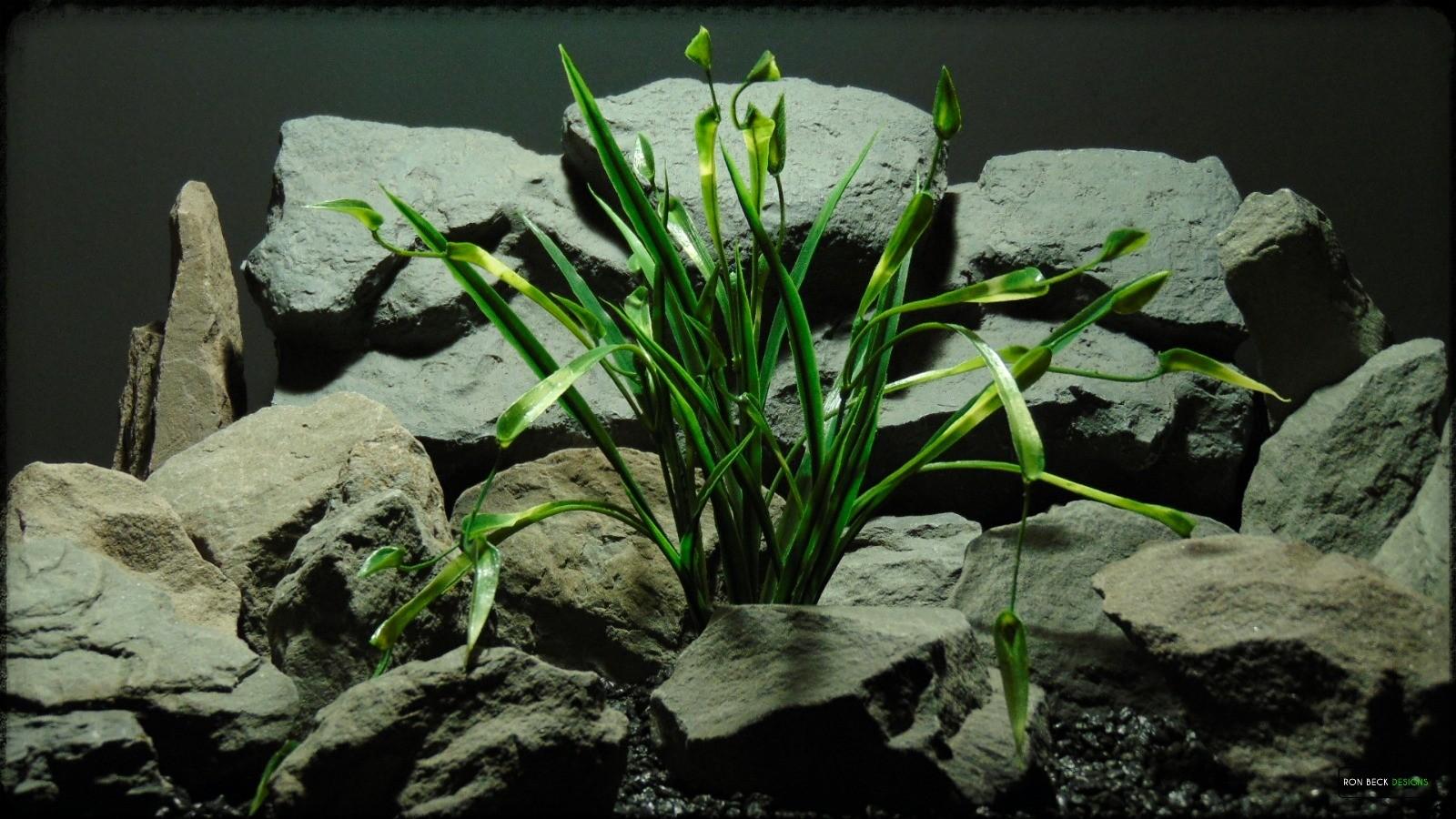Artificial Chain Sword Grass - Reptile Habitat Plant - PRP384