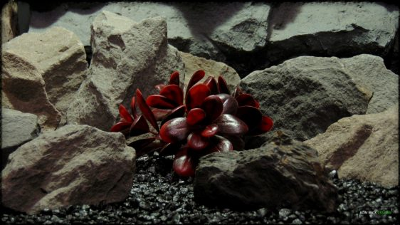 Artificial Crassula (merlot) - Reptile Habitat Plant - PRP385