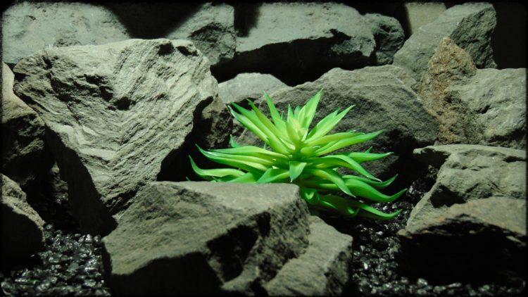 Artificial Fire Echeveria - Reptile Habitat plant Succulent - PRP394 2