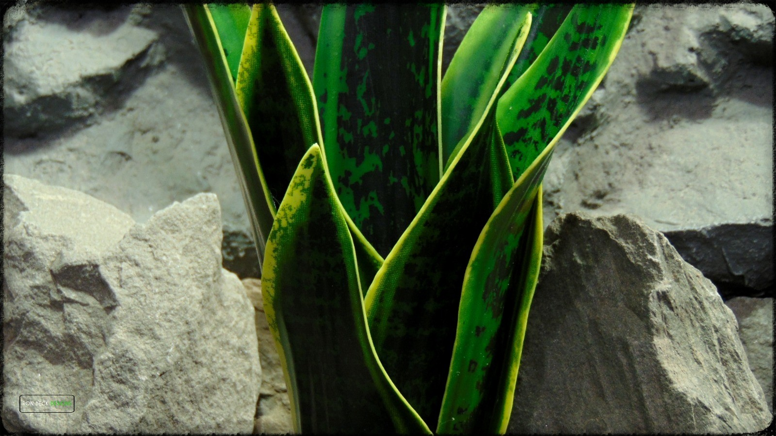 Artificial Sansevieria Mother in Law Tongue - Reptile Habitat Plant prp393 2