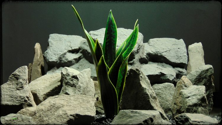 Artificial Sansevieria Mother in Law Tongue - Reptile Habitat Plant prp393