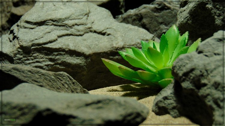 Artificial Echeveria elegans Succulent - Desert Reptile Decor Plant prp398 3