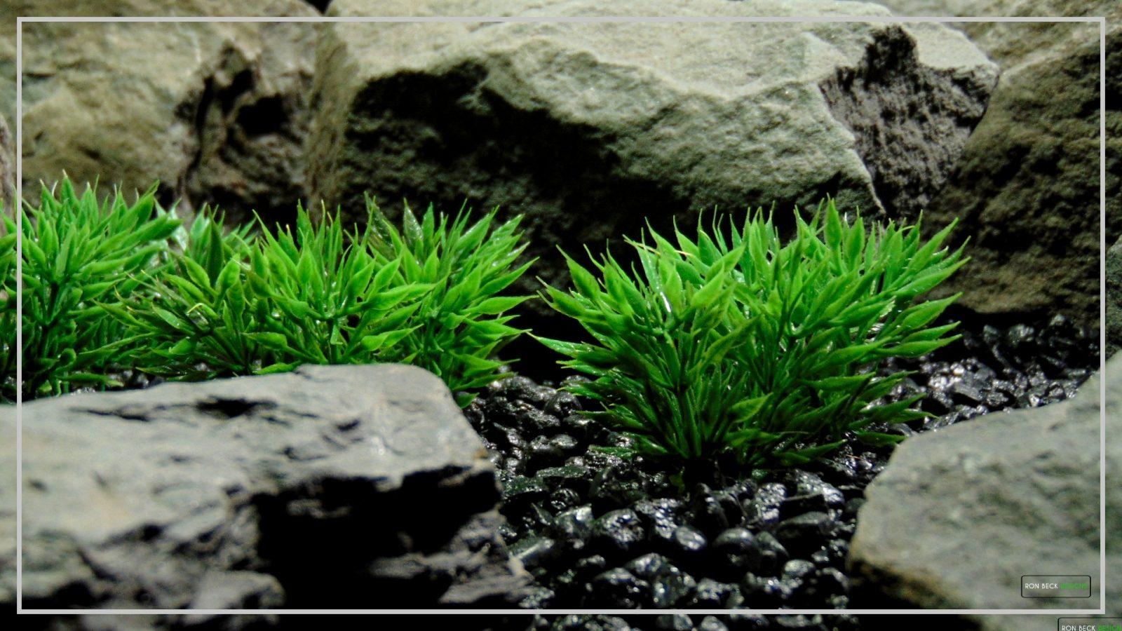 Artificial Podocarpus Grass Plot - Reptile Terrarium Habitat Plant - PARP402 1920 1080 2