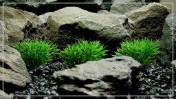 Artificial Podocarpus Grass Plot - Reptile Terrarium Habitat Plant - PARP402 1920 1080