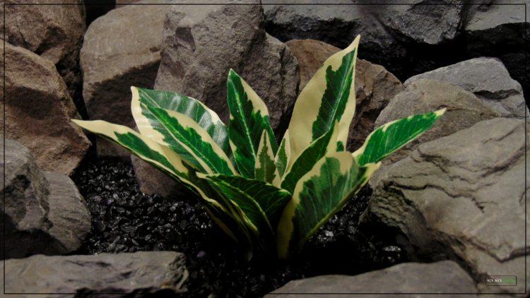 Artificial Silk Winter Daphne - Reptile terrarium Habitat Plant - Ron Beck Designs srp399 3