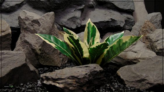Artificial Silk Winter Daphne - Reptile terrarium Habitat Plnt - Ron Beck Designs srp399