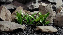 Artificial Bay Leaf Plot - Artificial Reptile Terrarium Plot - PRP411