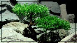 Artificial Cedar Bonsai - Reptile Terrarium Plant - Ron Beck Designs - prp408