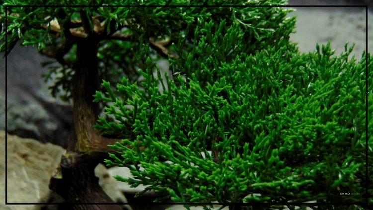 Artificial Cedar Bonsai - Reptile Terrarium Plant - Ron Beck Designs - prp408 3