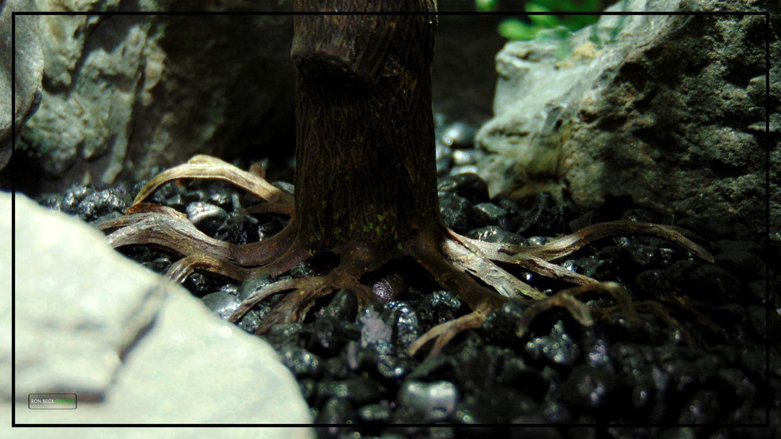 Artificial Cedar Bonsai - Reptile Terrarium Plant - Ron Beck Designs - prp408 4