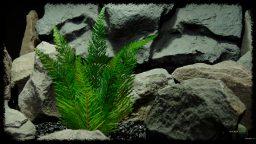 Artificial Flocked Fern - Soft Touch - Reptile Habitat Plant - PRP406 2