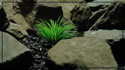 Fake Artificial Faux Tillandsia Plant - Artificial Reptile Habitat Plant PRP407