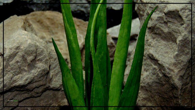 Artificial Soft Grass - Reptile Habitat or Home Decor Plant - prp419 3