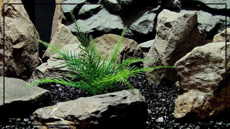 Artificial Spiked Fern - Aquarium or Reptile Terrarium Plant parp417 2