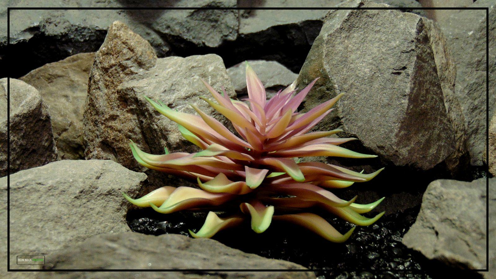 Artificial Echeveria (Plum Green) – Reptile Habitat Plant Succulent 2 prp425