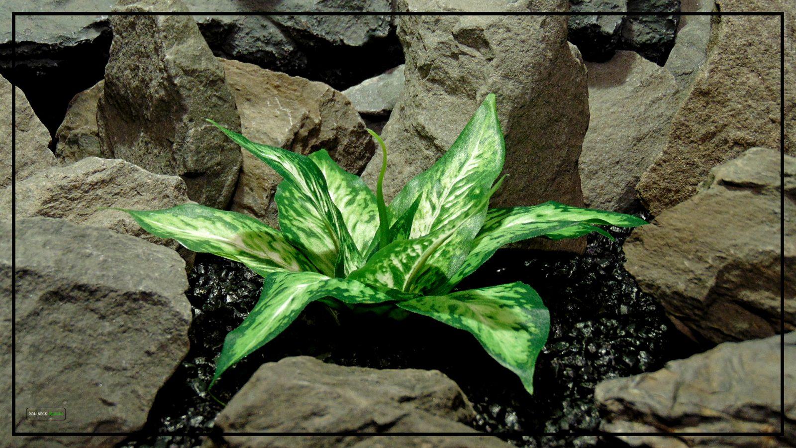 Artificial Silk Plant - Green Cream Leaves - Reptile Decor Artificial Plant srp424 2