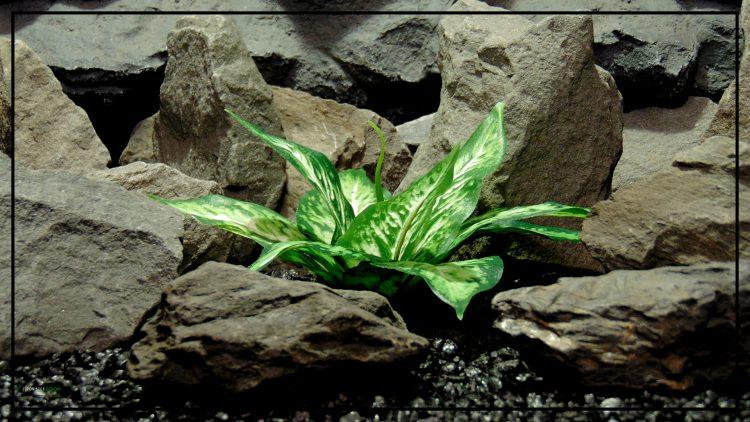 Artificial Silk Green Cream Leaves - Reptile Decor Artificial Plant srp424